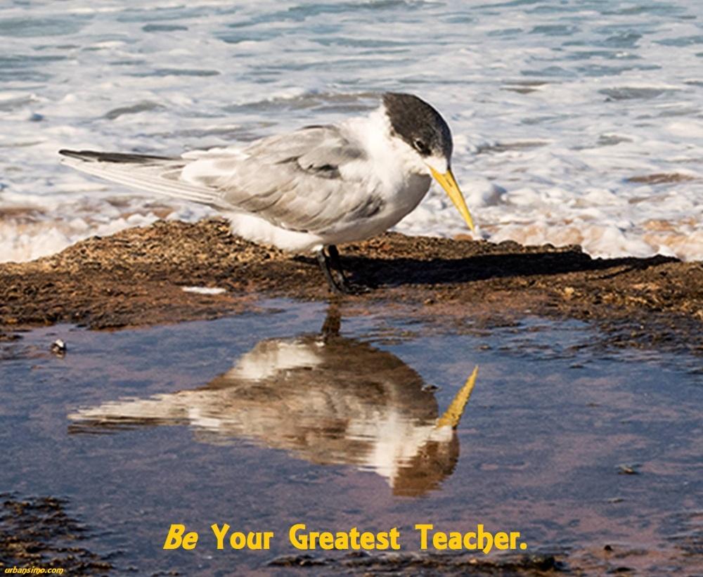 be your greatest teacher