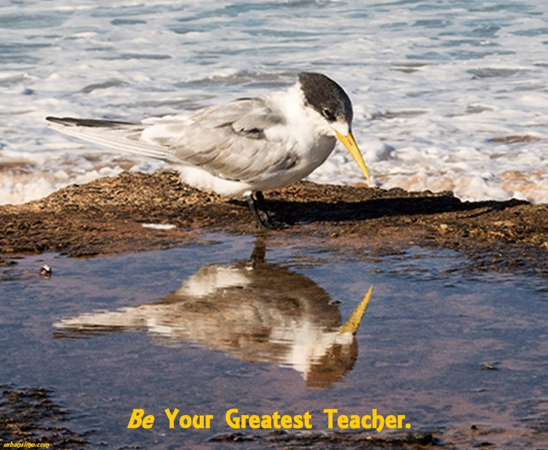 be your greatest teacher